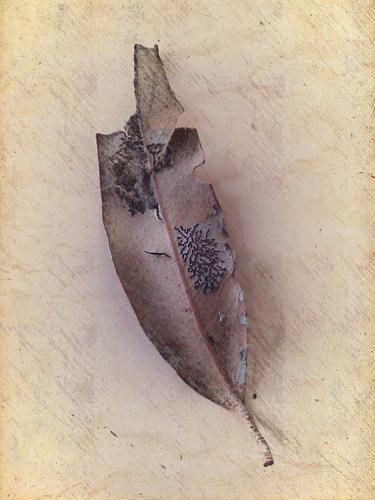 picsketch leaf three