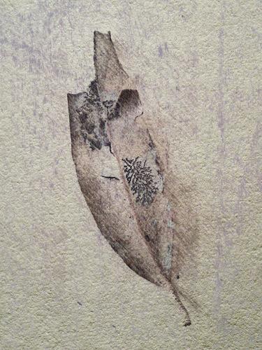 picsketch leaf two