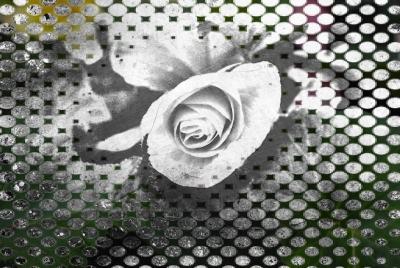 picsketch begonia bud