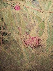 Gum blossom + bud. PicSketch.
