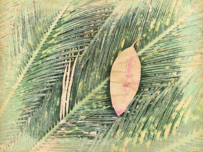 Leaf on leaves. PicSketch.