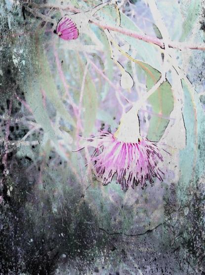 gum blossom bud