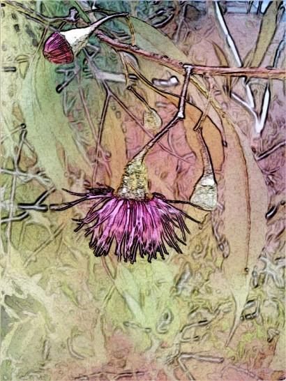 Gum blossom + bud. SketchCamera.