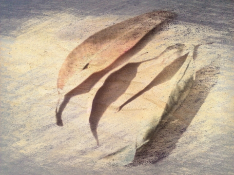 leaf gathering picsketch
