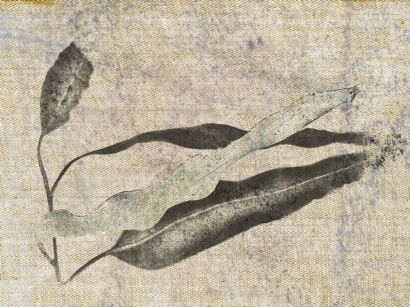 leaf trio half picsketch