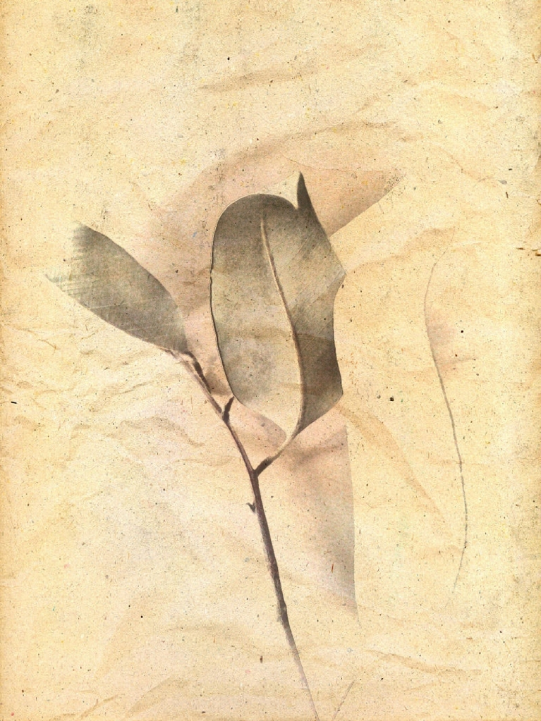 curled leaf picsketch