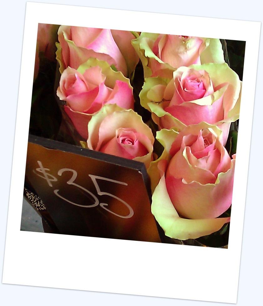 $35 roses photo polaroid