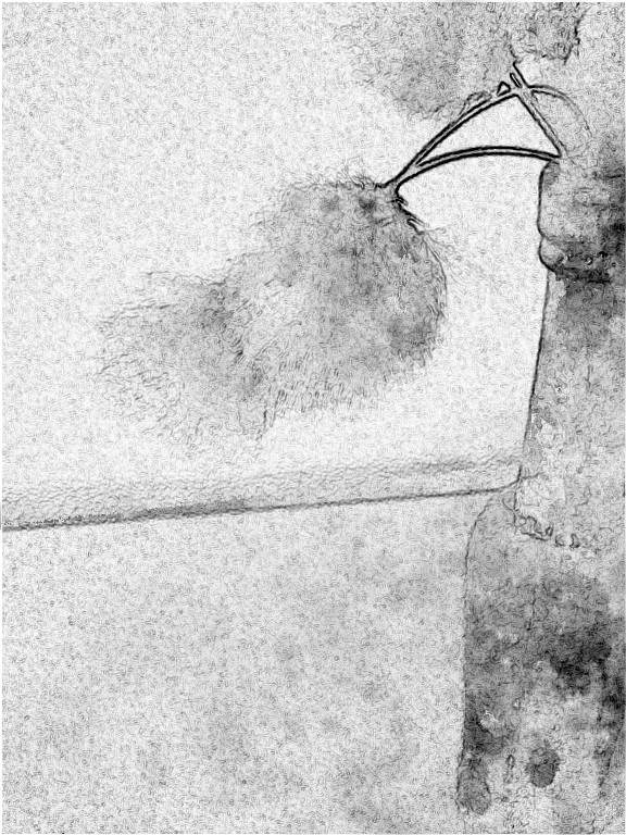 Bog cotton. SketchCamera.