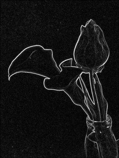 Lily + tulip. SketchCamera.