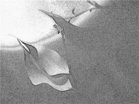 Leaf duo + shadow. SketchCamera.