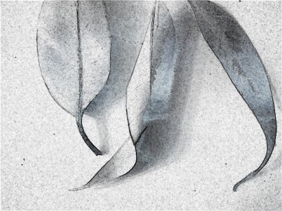 Leaf trio. SketchCamera.
