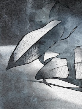 leaf shadow marble mono