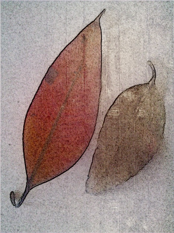 Red leaf duo. SketchCamera. Two views.