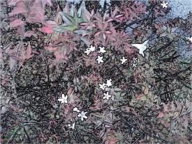 star flowers bush
