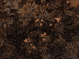 Star flowers bush. SketchCamera.