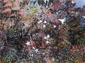 star flowers bush hipster
