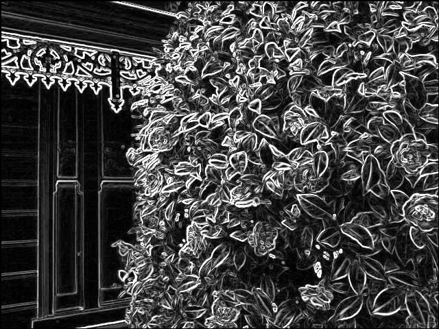 Camellia bush. SketchCamera.