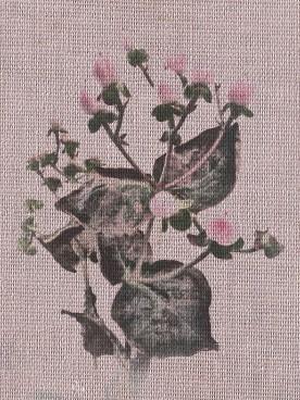 pink berries picsketch