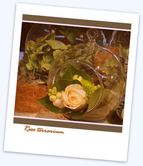 rose terrarium polaroid