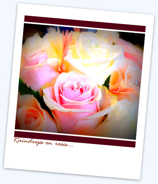 raindrops pink roses polaroid