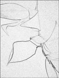 Leaves abstract. SketchCamera. Four views.