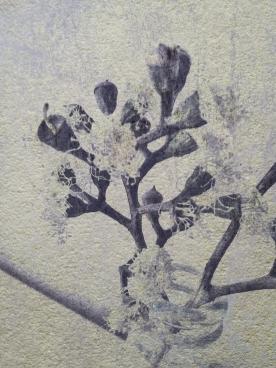 bud blossom mono