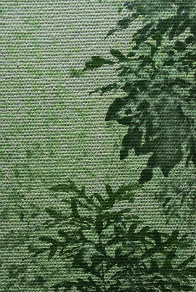 Firewheel bush. PicSketch.