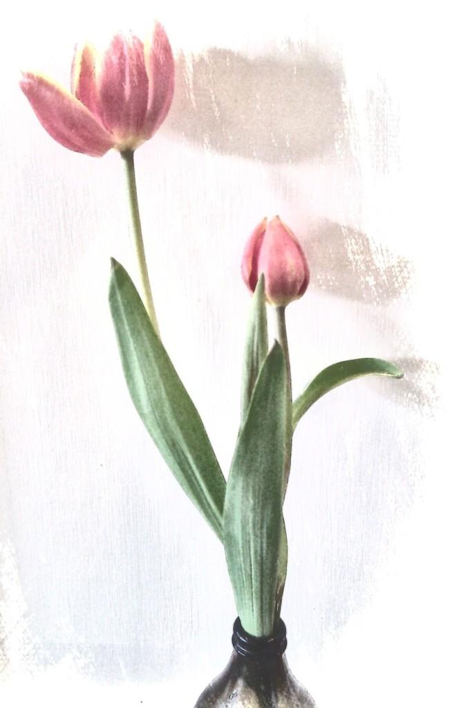 Tulip. PicSketch.