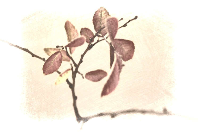 Brown leaves. PicSketch. Three views.
