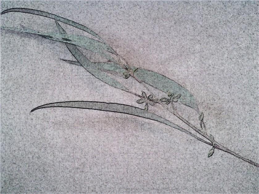 Leaf + bud. SketchCamera.