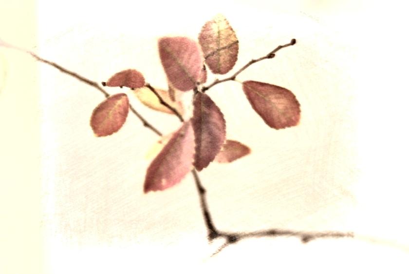 Brown leaves. PicSketch. Two views.
