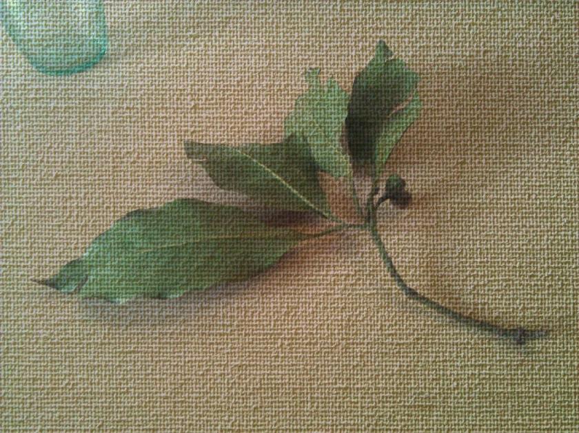 Leaf+bud. PicSketch.