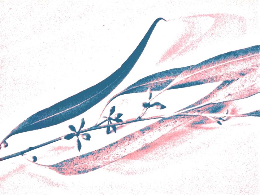 Leaf + bud. PicSketch. Two views.