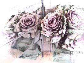Ornamental kale. PicSketch.
