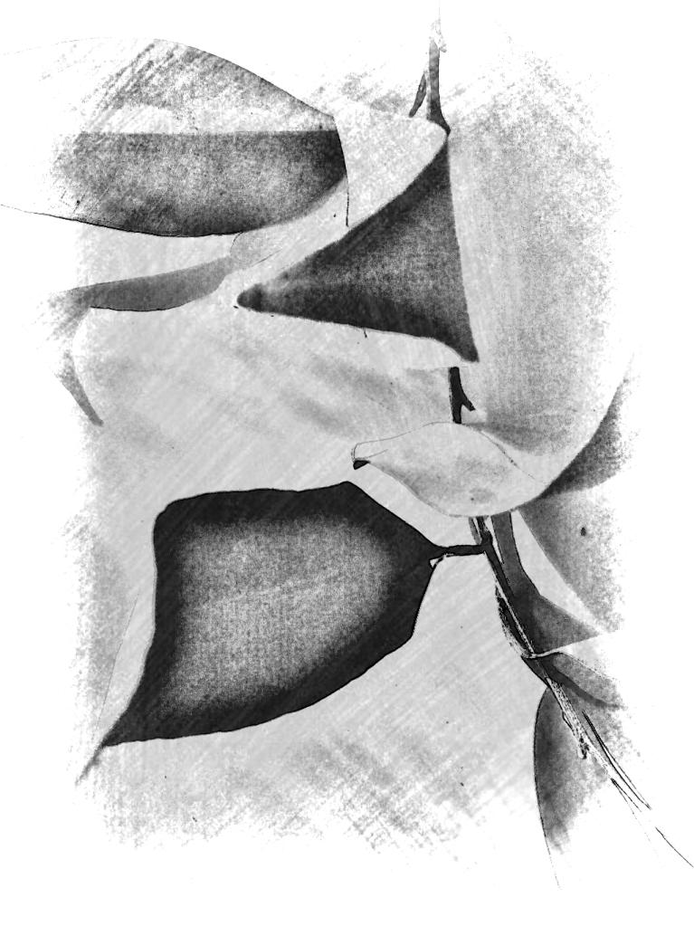 Leaves abstract mono. PicSketch.