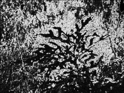 Bush abstract. SketchCamera. Three views.