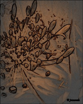 Agapanthus abstract. Various software.