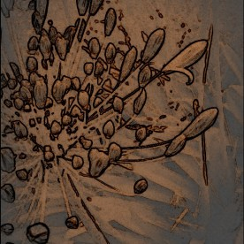 Agapanthus abstract. Various software.