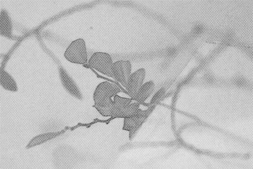 Leaves on branch abstraction. SketchCamera. Two views.