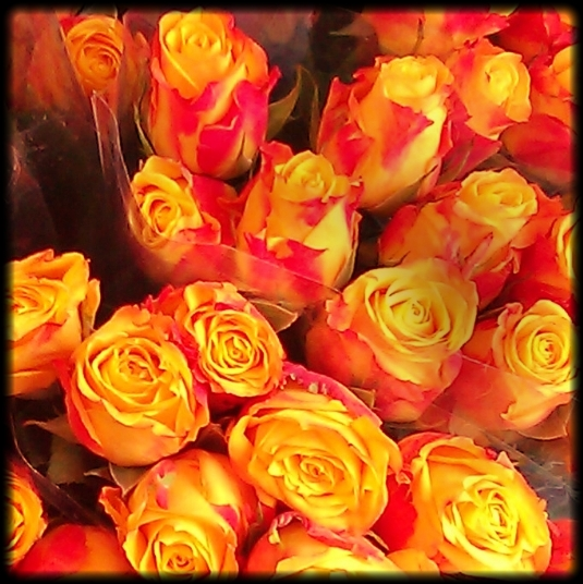 Yellow/red roses, bringing sunshine to a cloudy day. Close crop. PicturePerfect.
