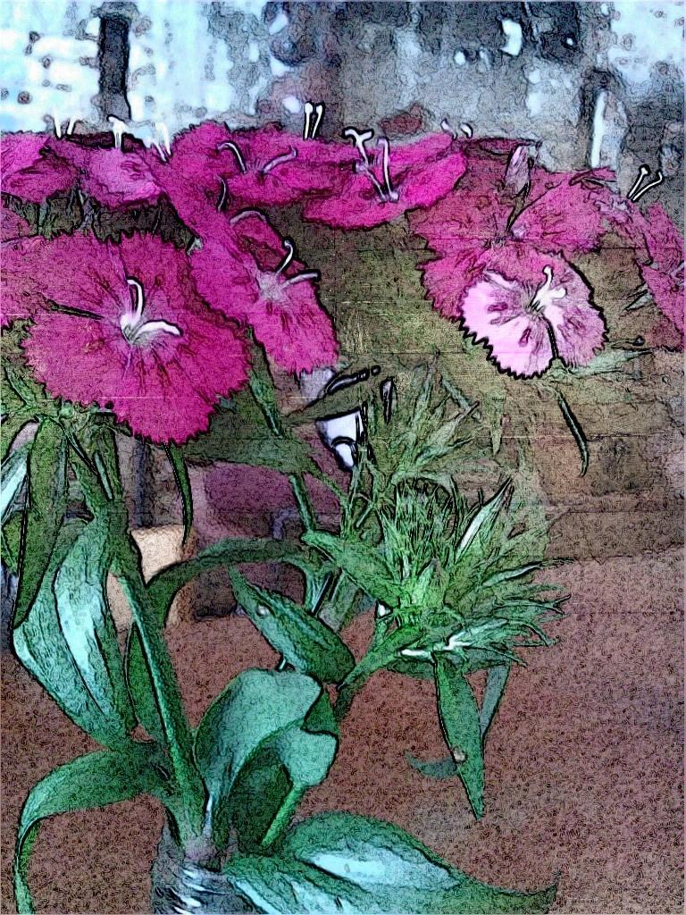 Flowers. SketchCamera.