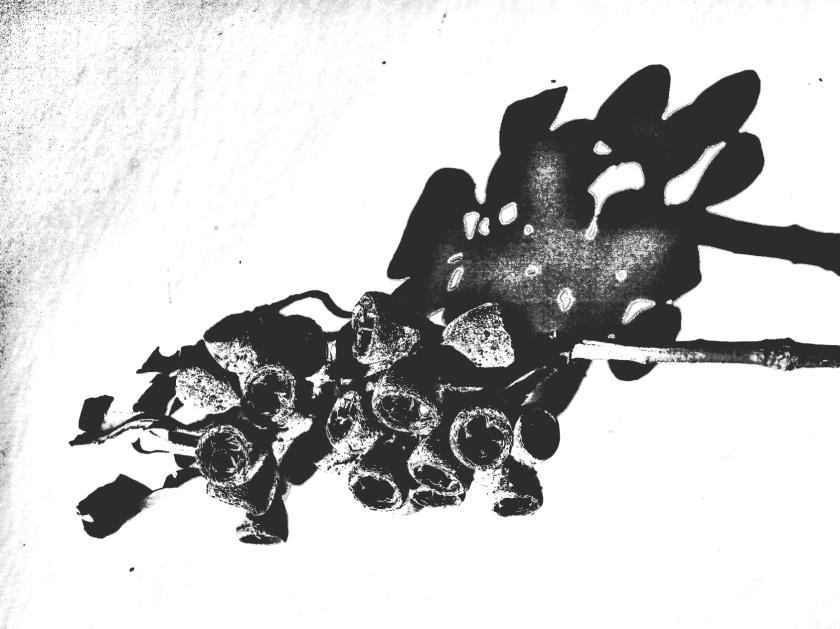 Seedpod + shadow. PicSketch.