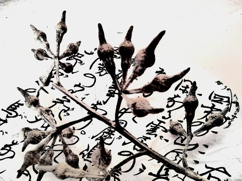 Seedpod on Japanese paper. PicSketch.