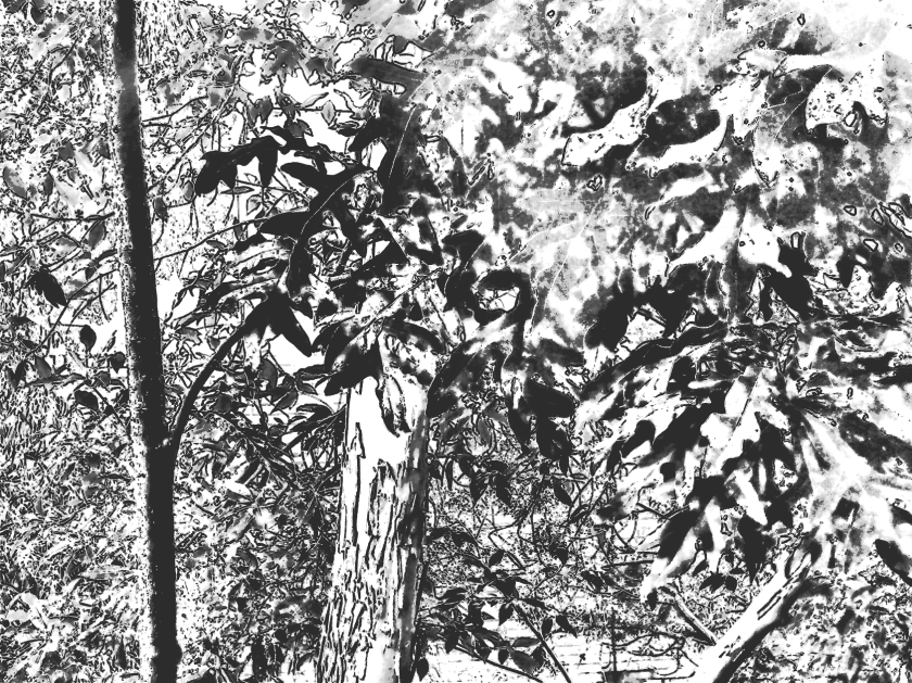 Trees + leaves. PicSketch. The first of three.