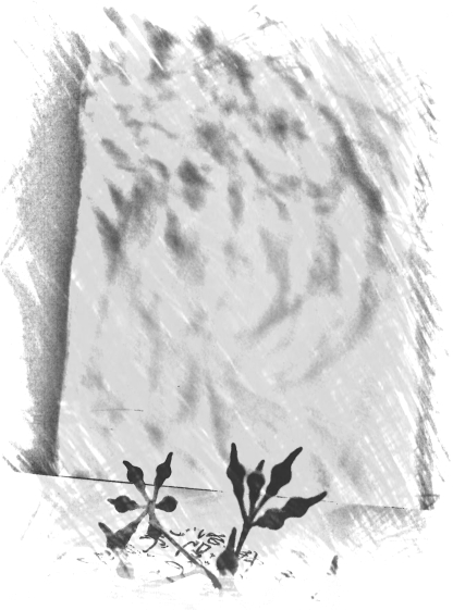 seedpod shadow mono