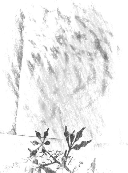 Seedpod + leaf shadowplay. PicSketch.