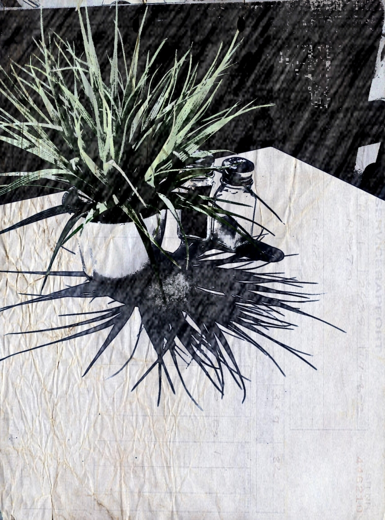 Spiky grass shadow. Picsketch. Two views.