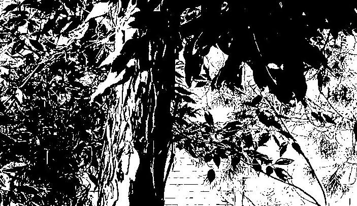 Tree + leaves. PicSketch. Two views.