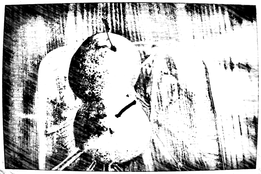 Pear duo on glass plate. PicSketch. *the final.