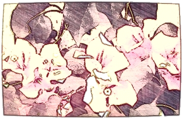Bougainvillea. Close crop in PicturePerfect. Then watercolorized in PicSketch using a pink tint.